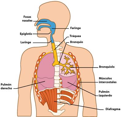 El tabaco perjudica la salud - 1 7